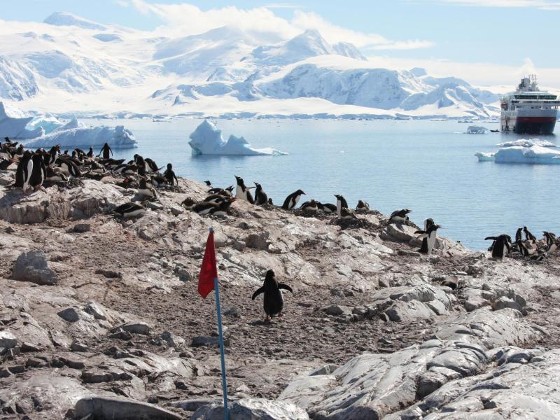 Bild zu Pinguine in der Antarktis