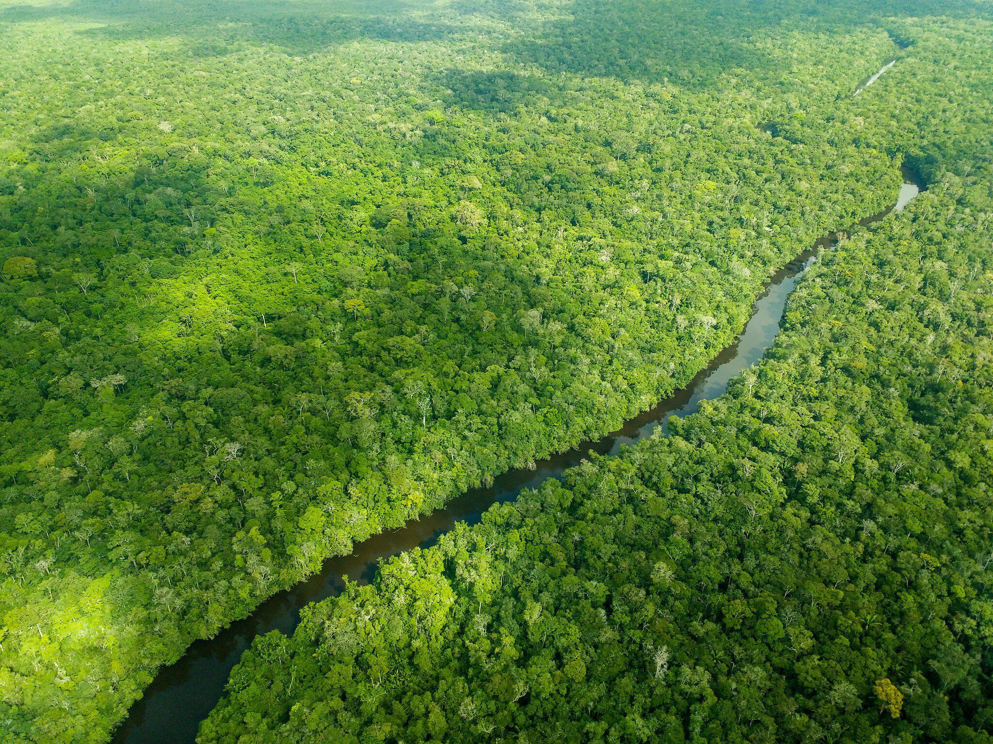 Bild zu Studie: Weltweit zwölf Millionen Hektar Tropenwald verschwunden