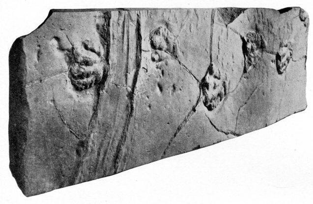 Bild zu Fossil