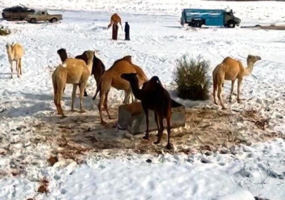 Bild zu Verkehrte Welt: In Saudi-Arabien hat es geschneit