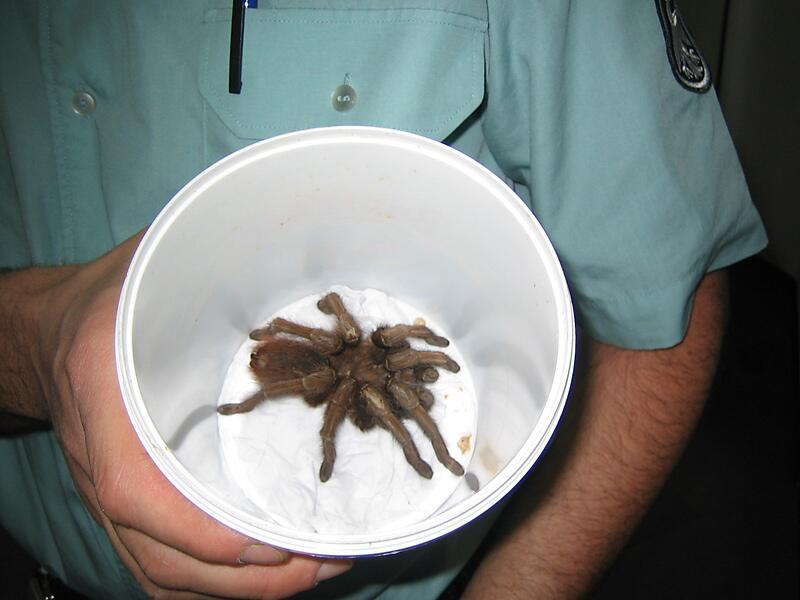 Bild zu Spinne