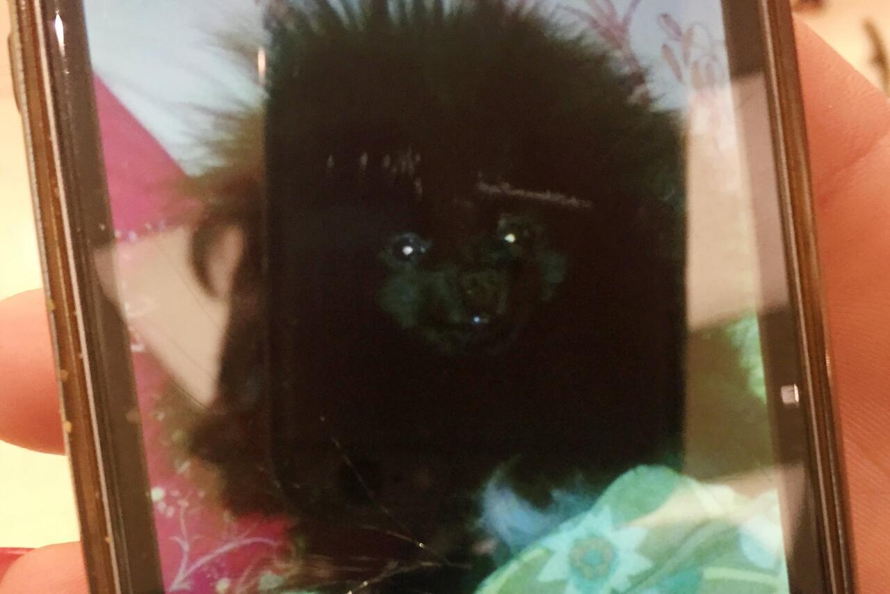 Bild zu Schoßhund Filou getötet: Angeklagter freigesprochen