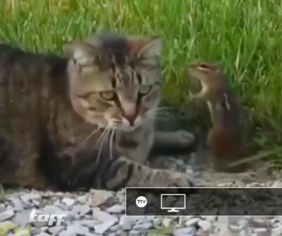 Bild zu Katze, Streifenhörnchen