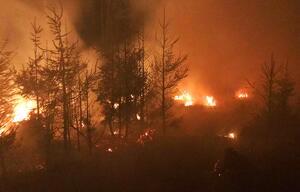 Feuer im Seulingswald