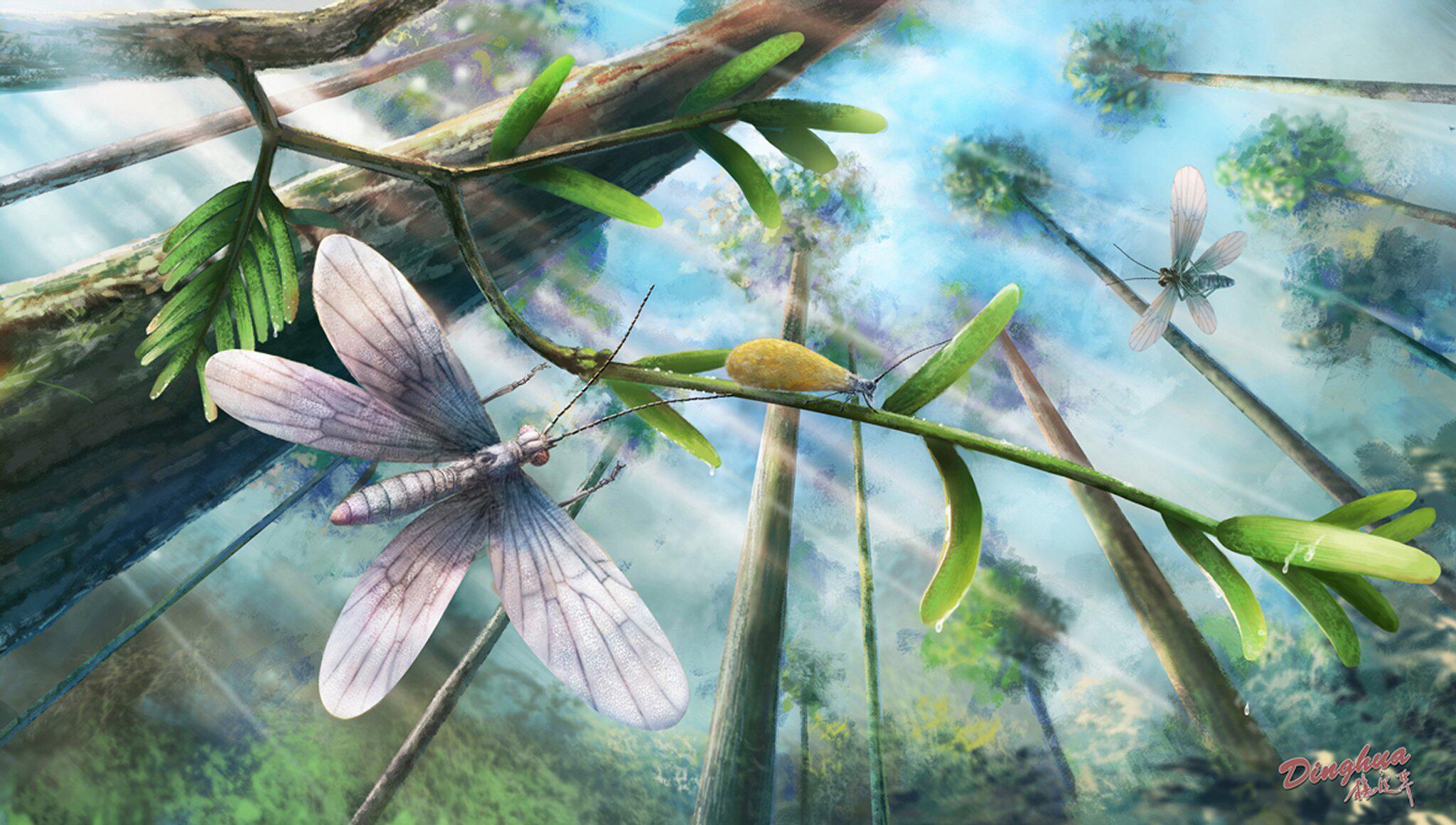 Bild zu Illustration: Schmetterlingsvorläufer aus der Kreidezeit