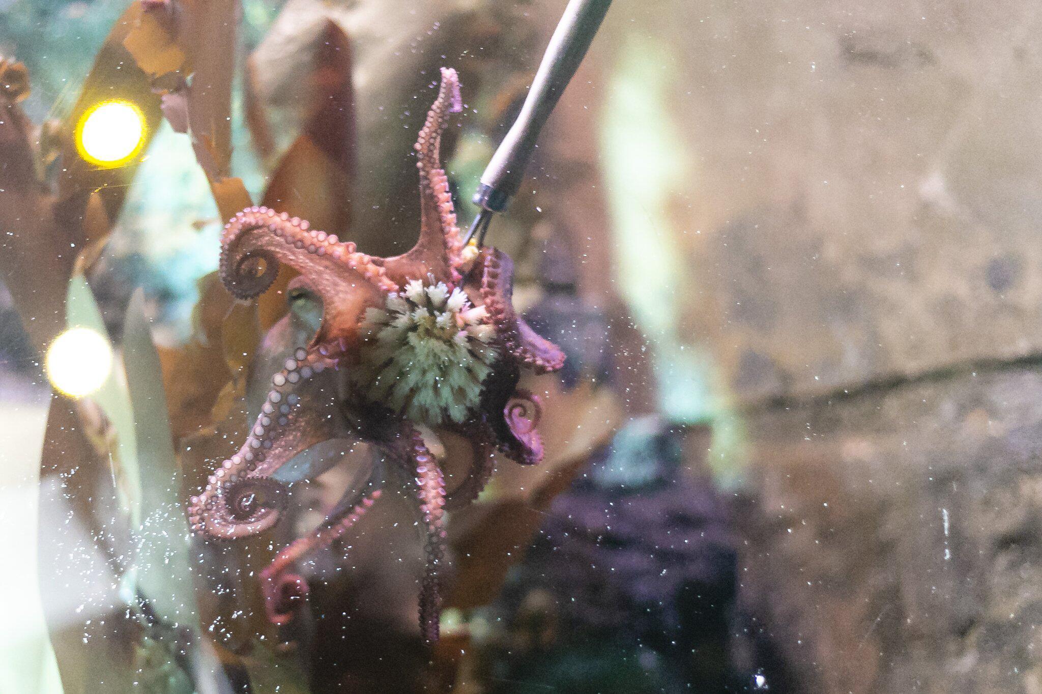 Bild zu Frühjahrsputz im Sea Life