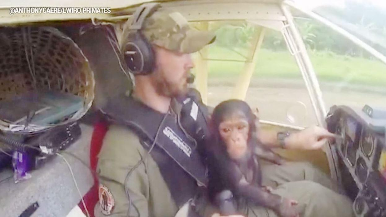 Bild zu Affenbaby Kameraone