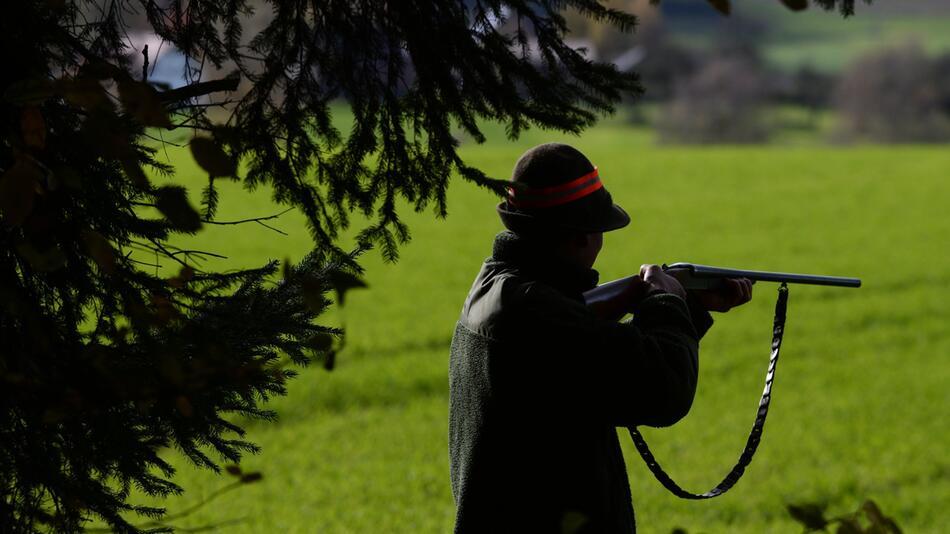 Prozess gegen Jäger, der zwei Hunde erschossen haben soll