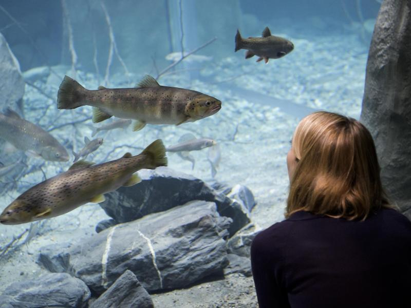 Bild zu Aquarium von Aquatis
