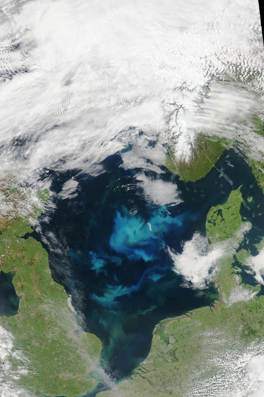 Bild zu Nordsee Algenblüte Satellitenbild