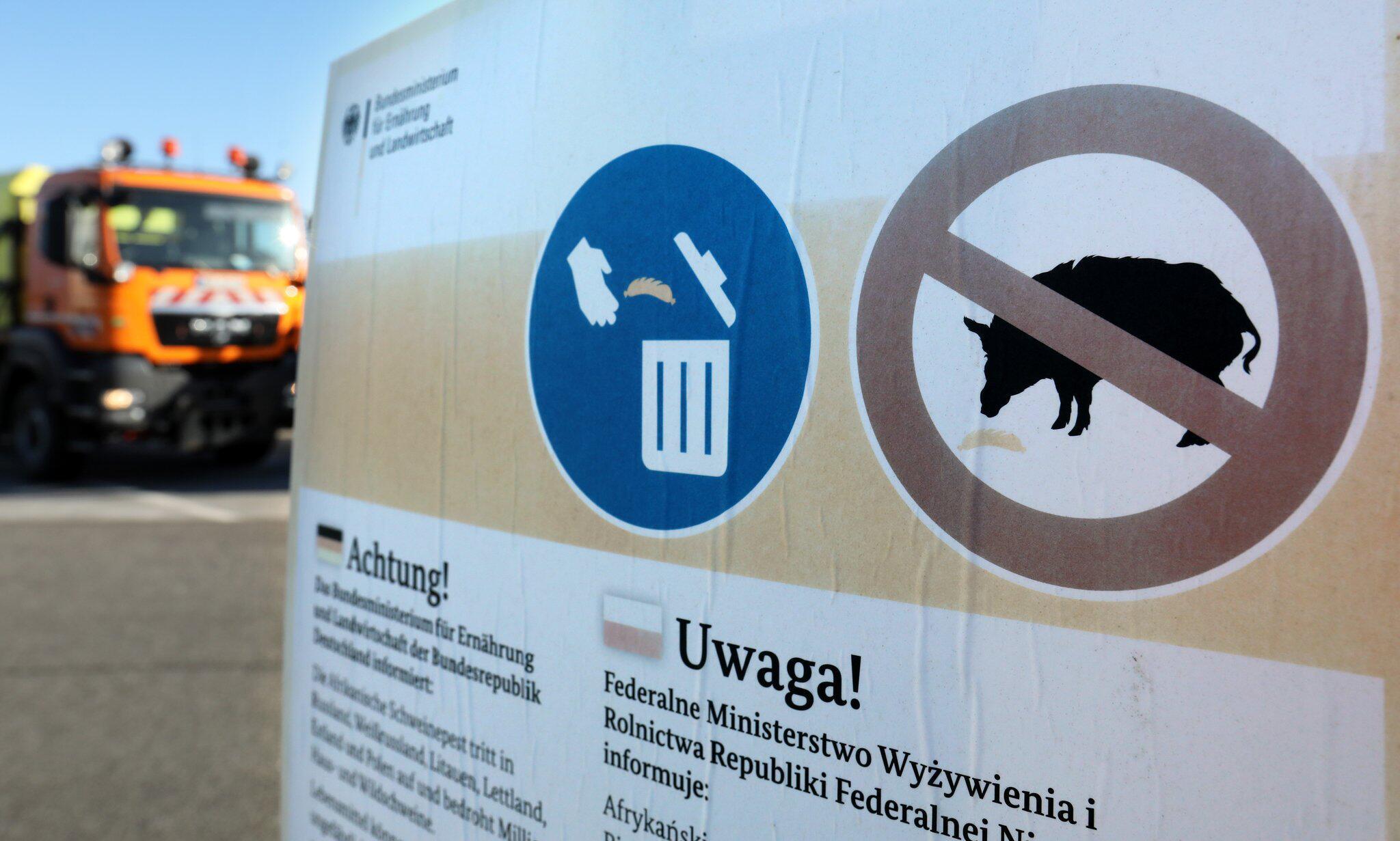 Bild zu Kampf gegen Schweinepest