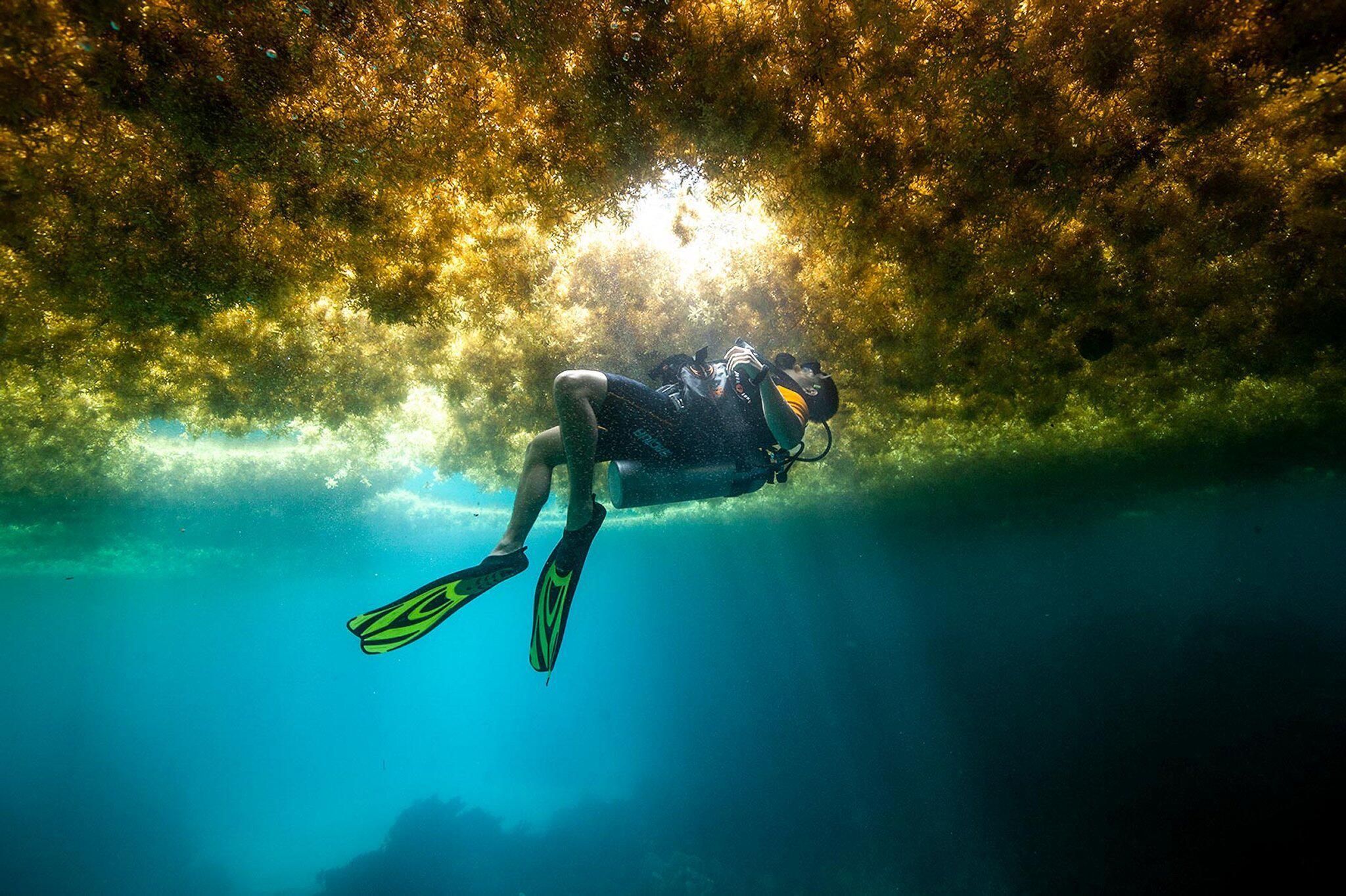 Bild zu Algenplage in der Karibik