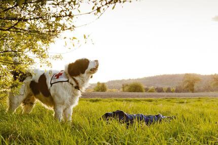 Training für Rettungshunde