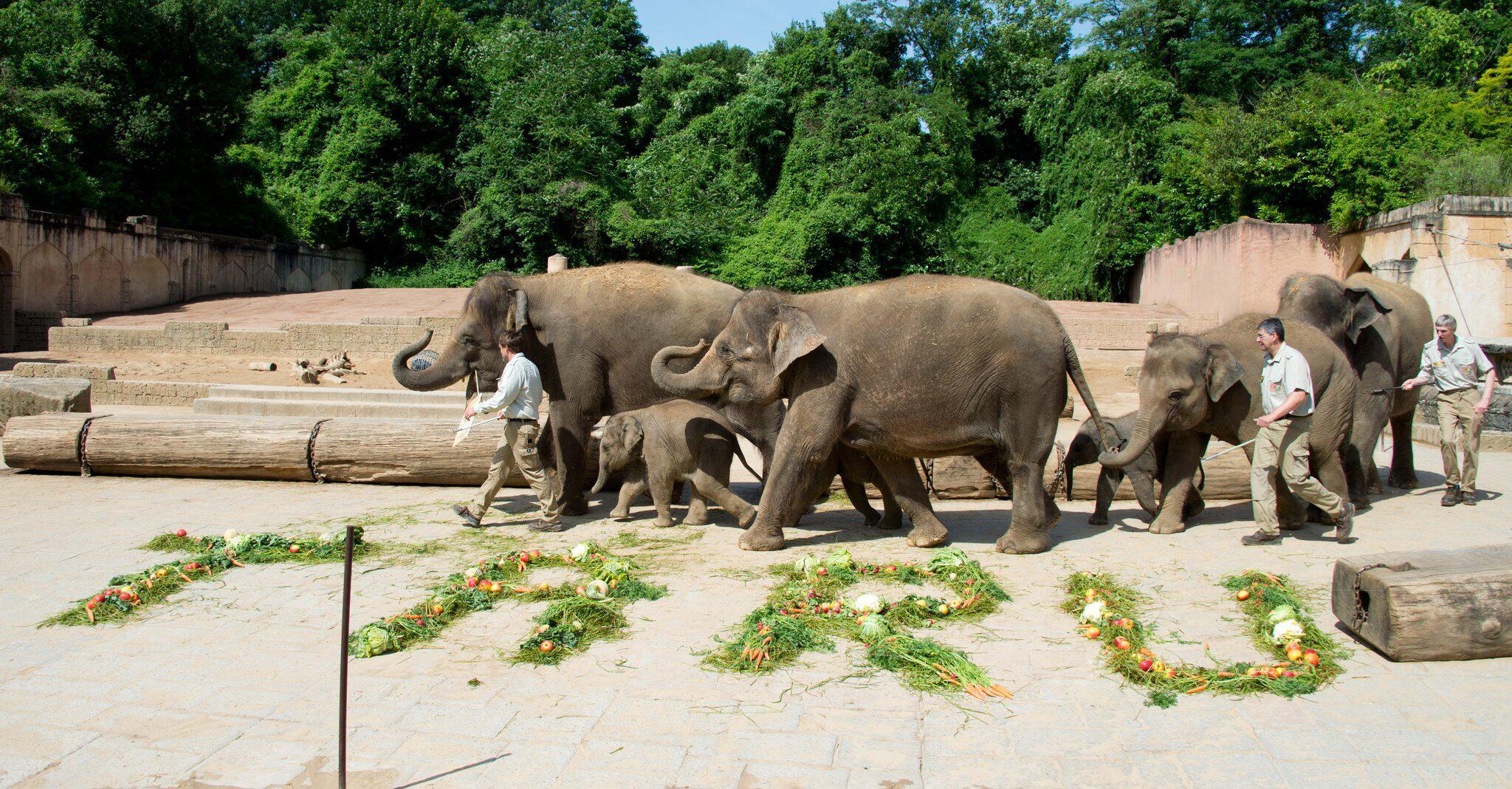 Bild zu Taufe Elefant Zoo Hannover