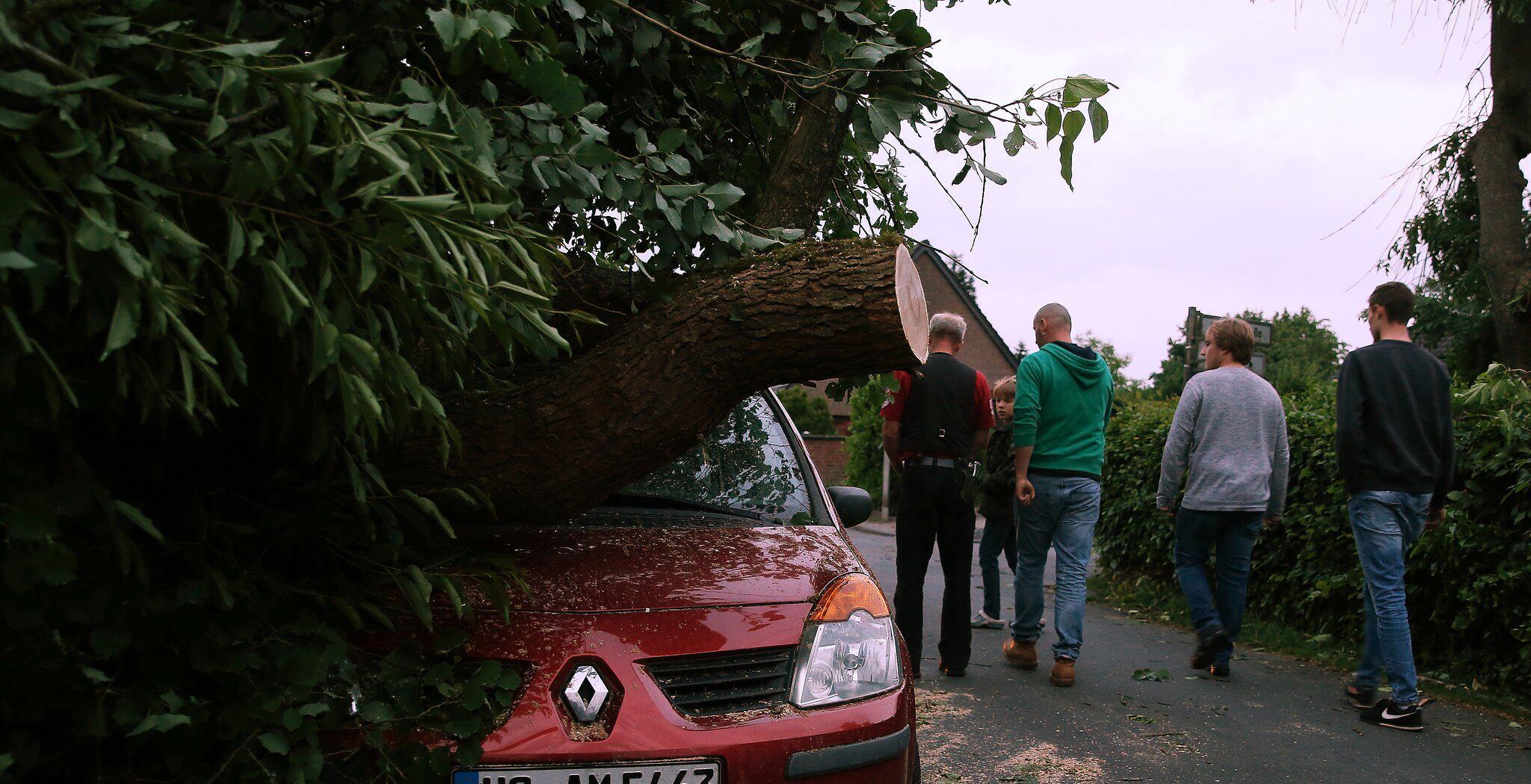 Bild zu Tornado, Schwalmtal, Auto, Baum, Renault, Kreis Viersen