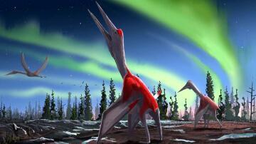 Bild zu Saurier, Flugsaurier, Cryodrakon boreas, Gefrorener Drache des Nordwinds
