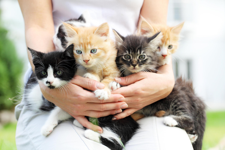 Bild zu Katzenbaby