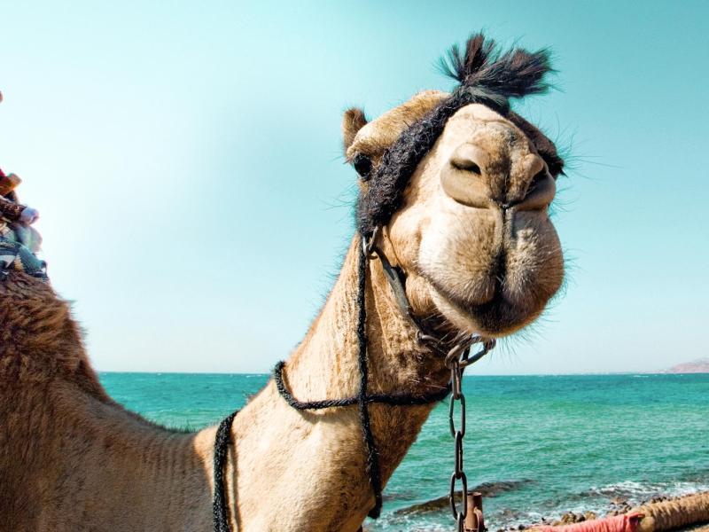Bild zu Ägypten wieder beliebt