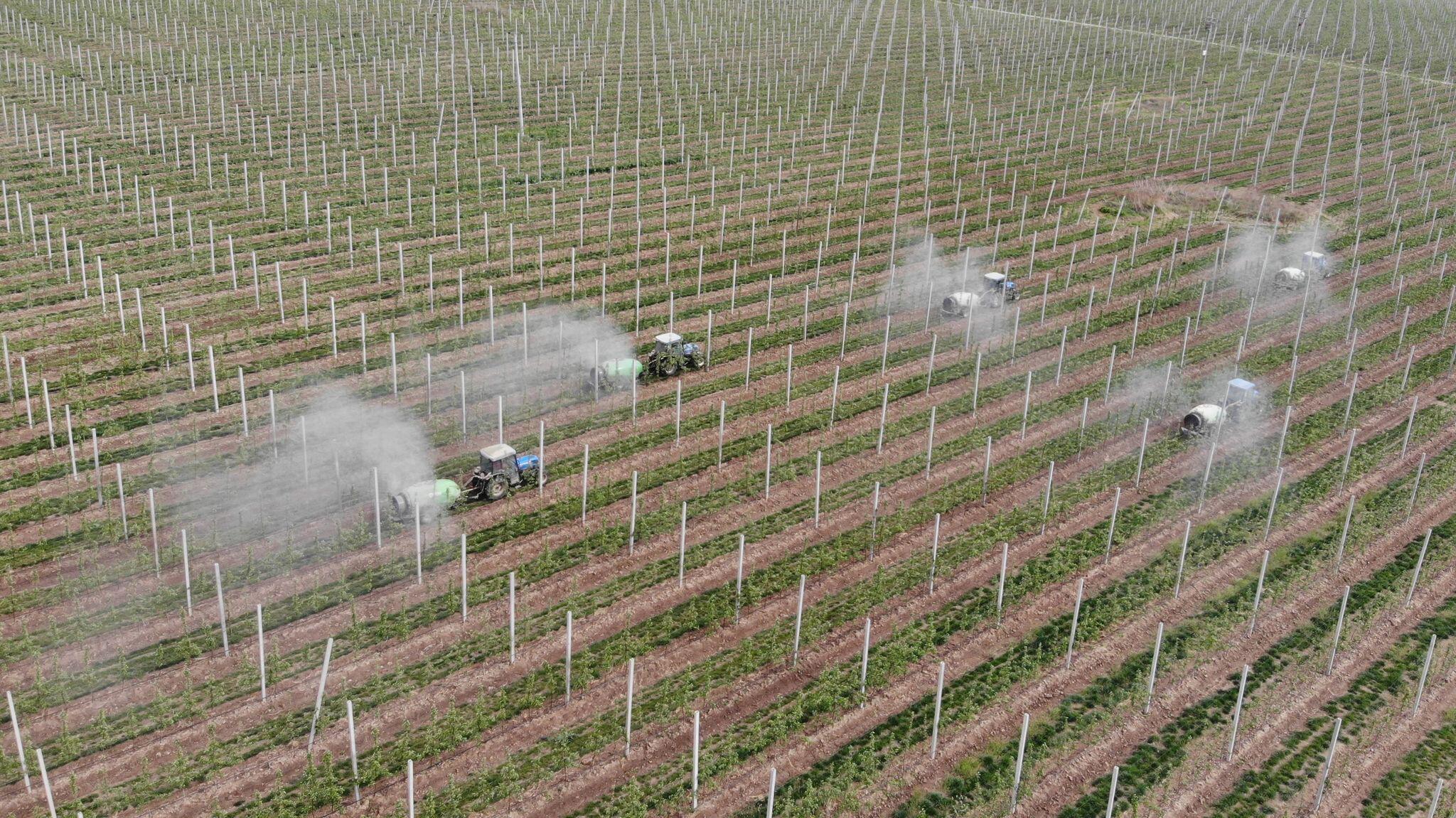 Bild zu Landwirtschaft in China