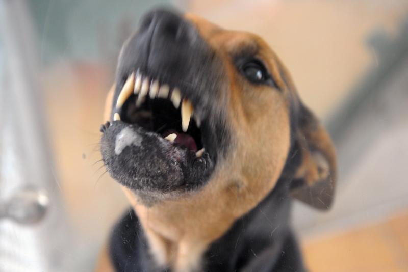 Bild zu Hund beisst