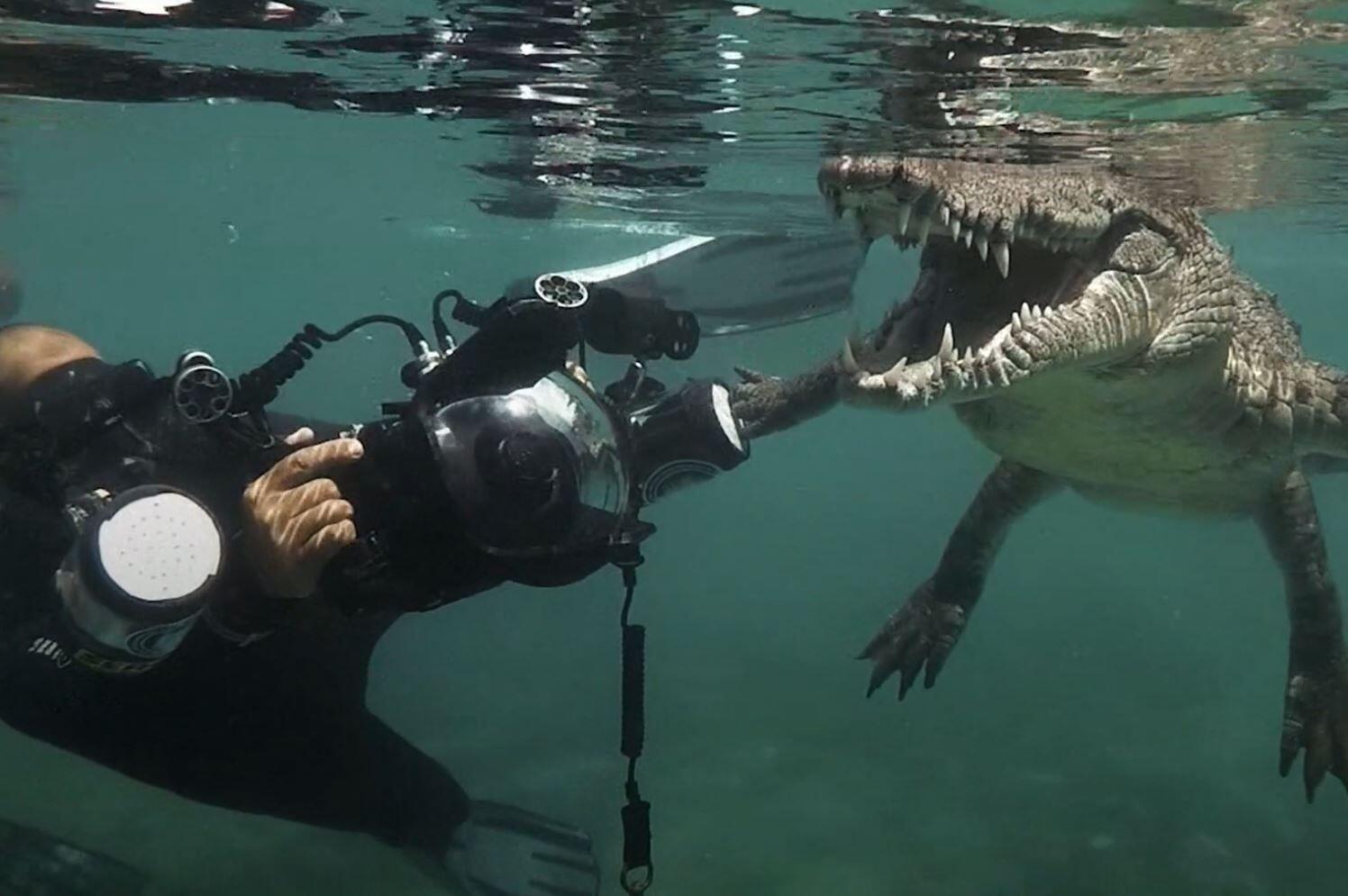 Bild zu Krokodil