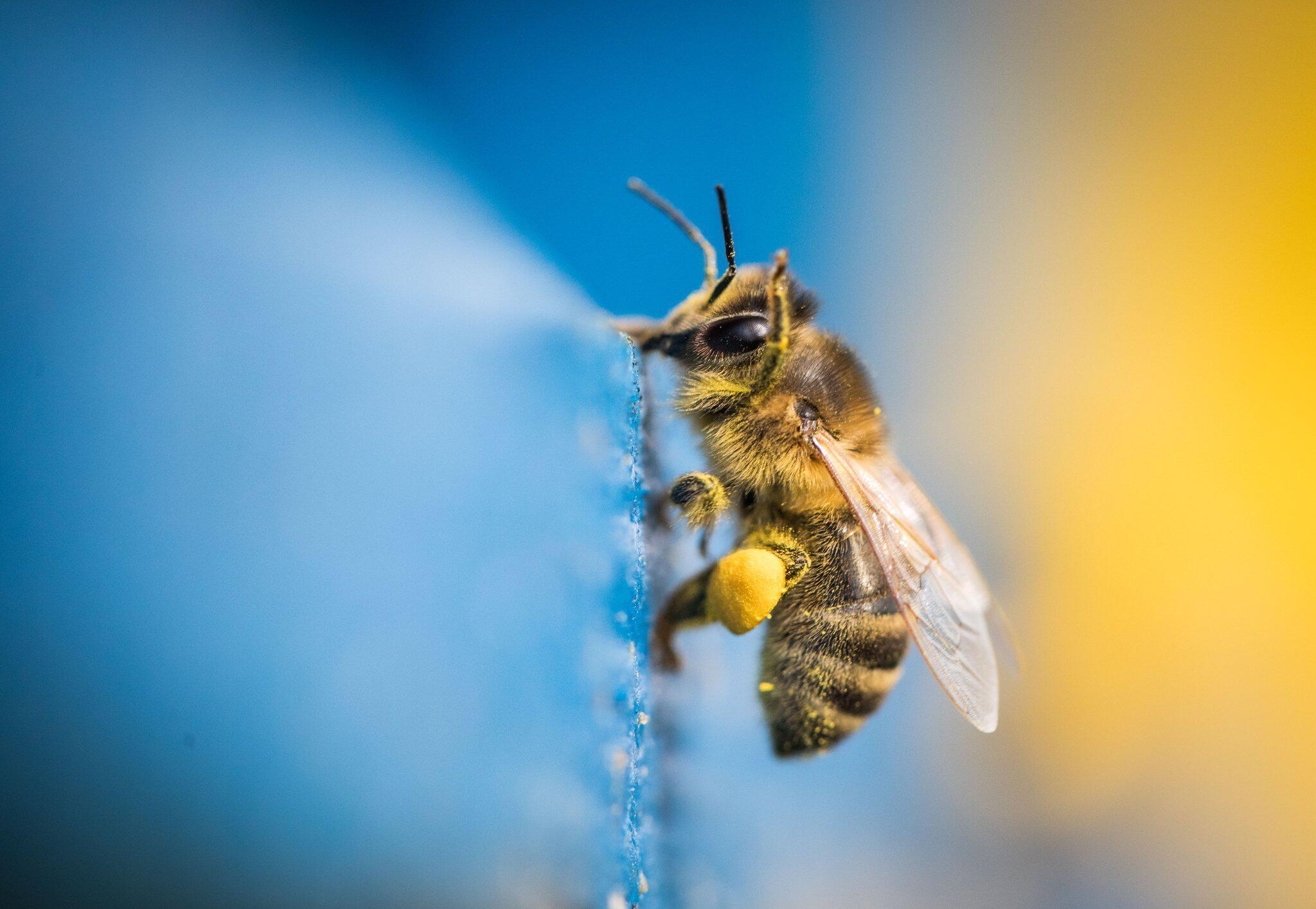 Bild zu Biene ist unterwegs
