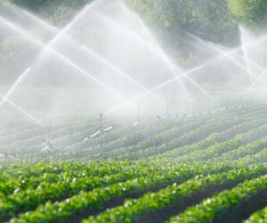 Wasser sparen: Weniger Fleisch und mehr Obst aus der Region