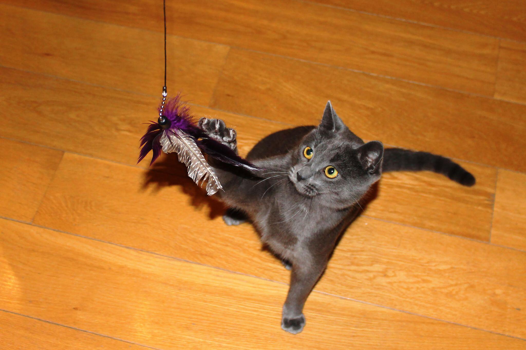 Bild zu Katze Handout