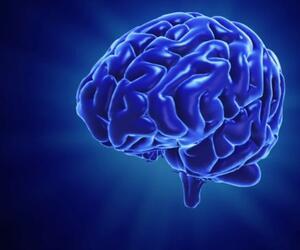 Testen Sie Ihr Gehirn
