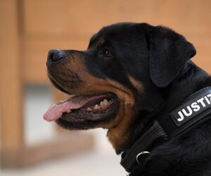 Drogen- und Handy-Spürhunde im Gefängnis