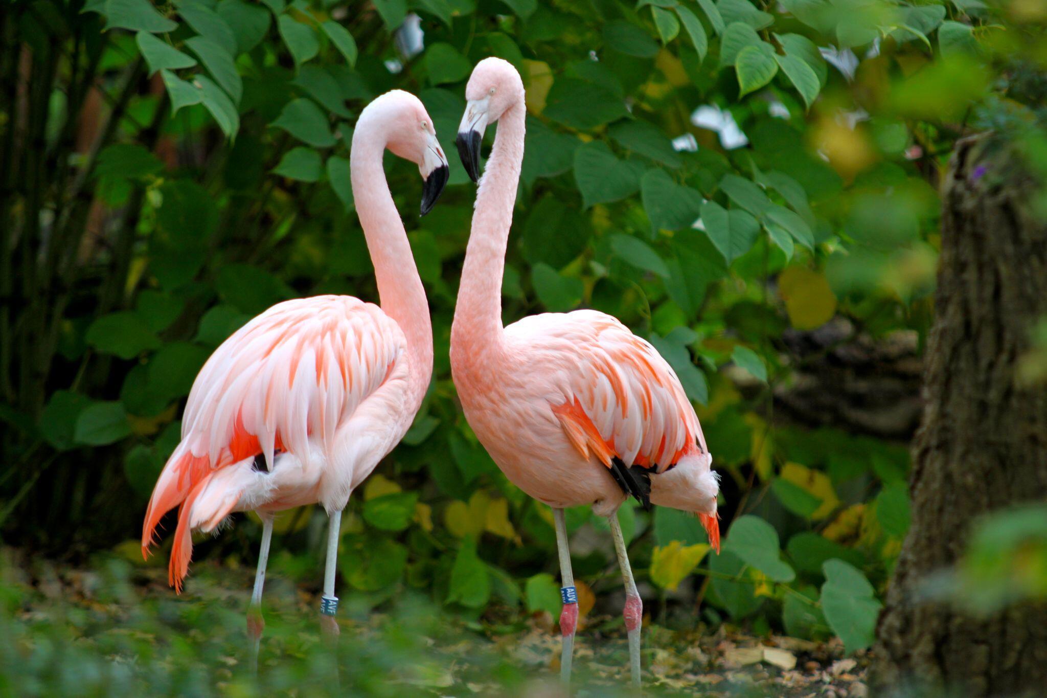 Bild zu Flamingo gestohlen: Tierpark Hamm glaubt nicht an ein Wiedersehen