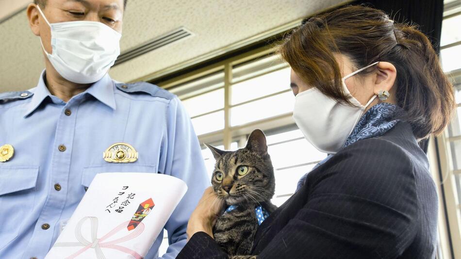 Kater in Japan erhält Dankesurkunde nach Rettungseinsatz