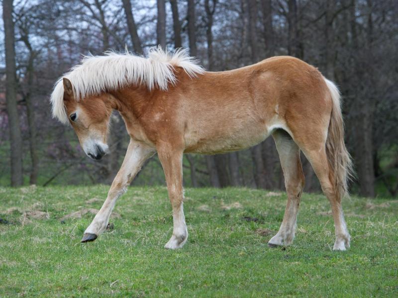Bild zu Pferde auf Rügen