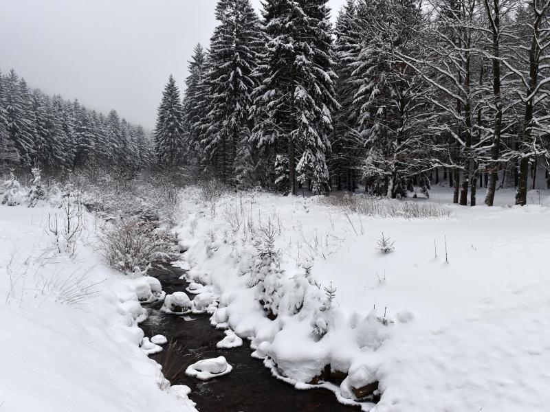 Bild zu Winter in Sachsen