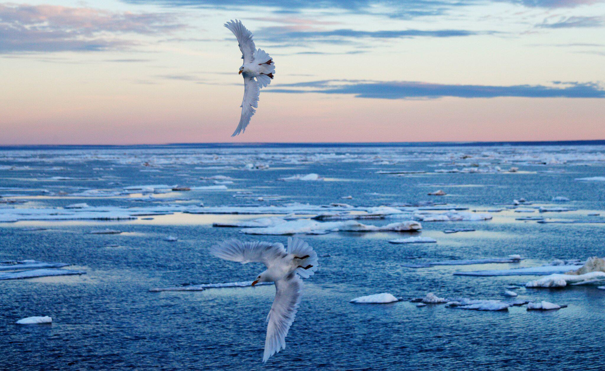 Bild zu Klimawandel - Arktis