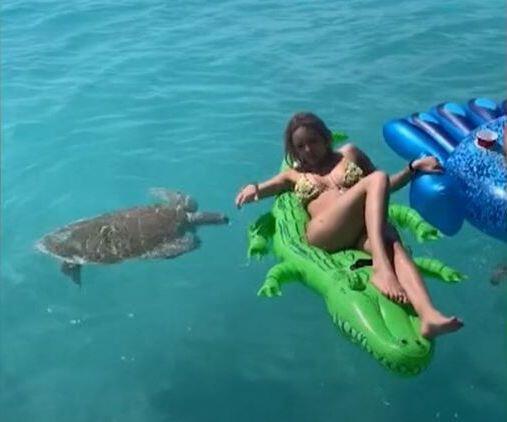 Bild zu Schildkröte