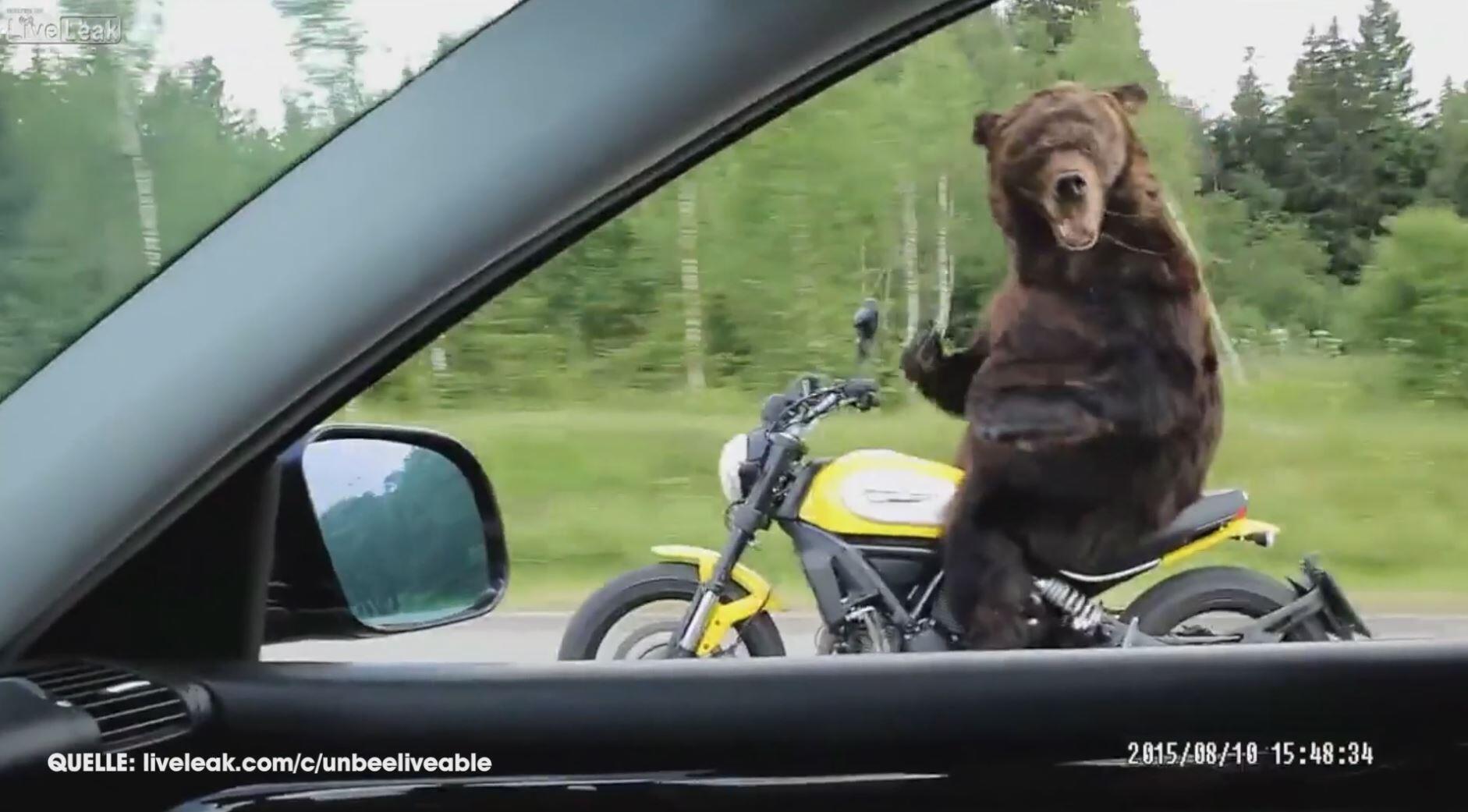 Bild zu Unhöflicher Bär auf Motorrad