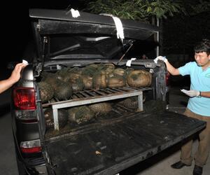 Bedrohte Schuppentiere in Vietnam gerettet