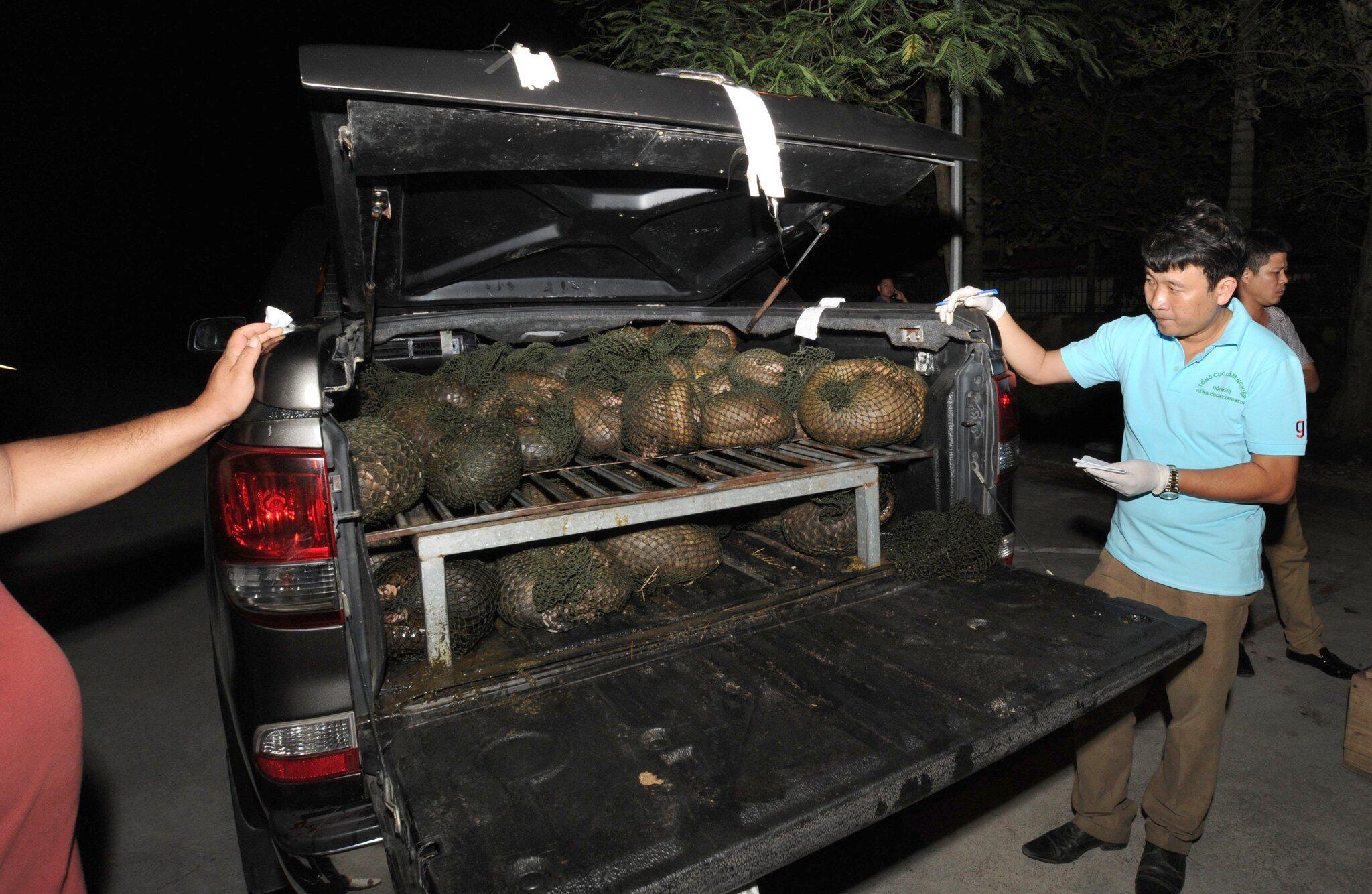 Bild zu Bedrohte Schuppentiere in Vietnam gerettet