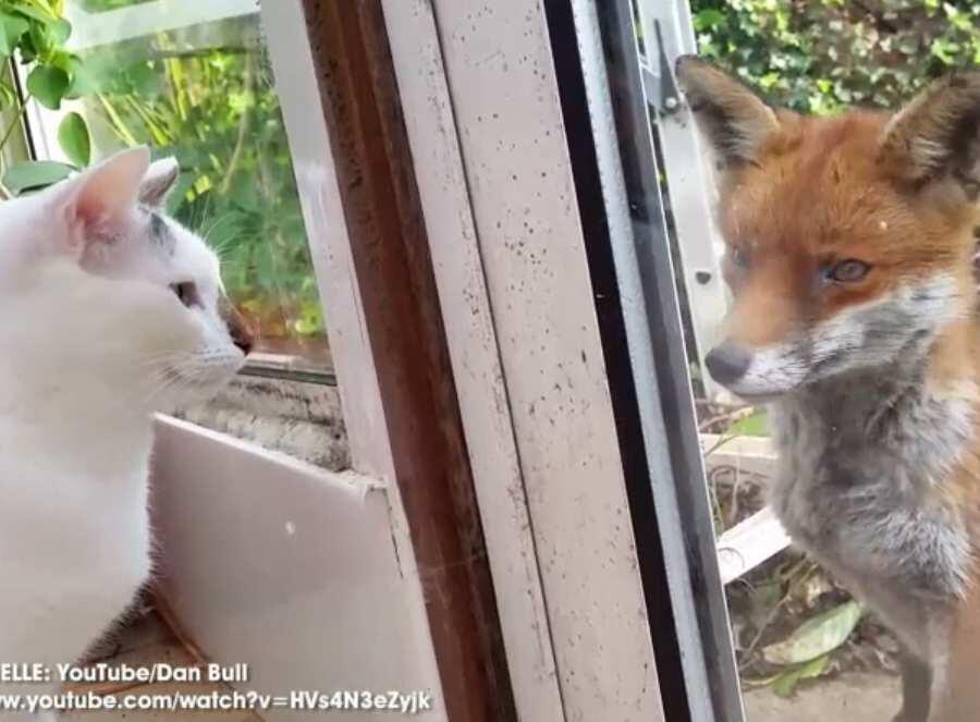 Bild zu Wenn Fuchs und Katze sich Guten Tag sagen