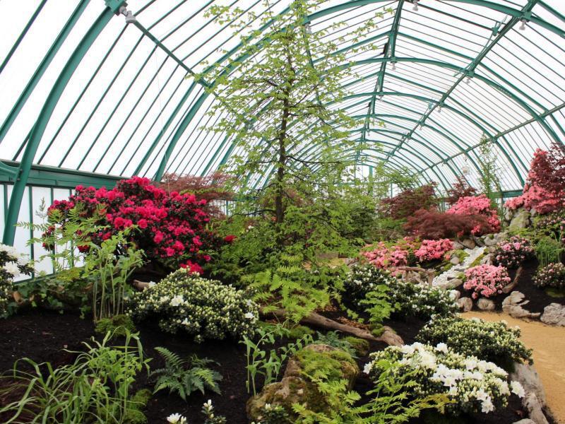 Bild zu Verschiedene Pflanzen