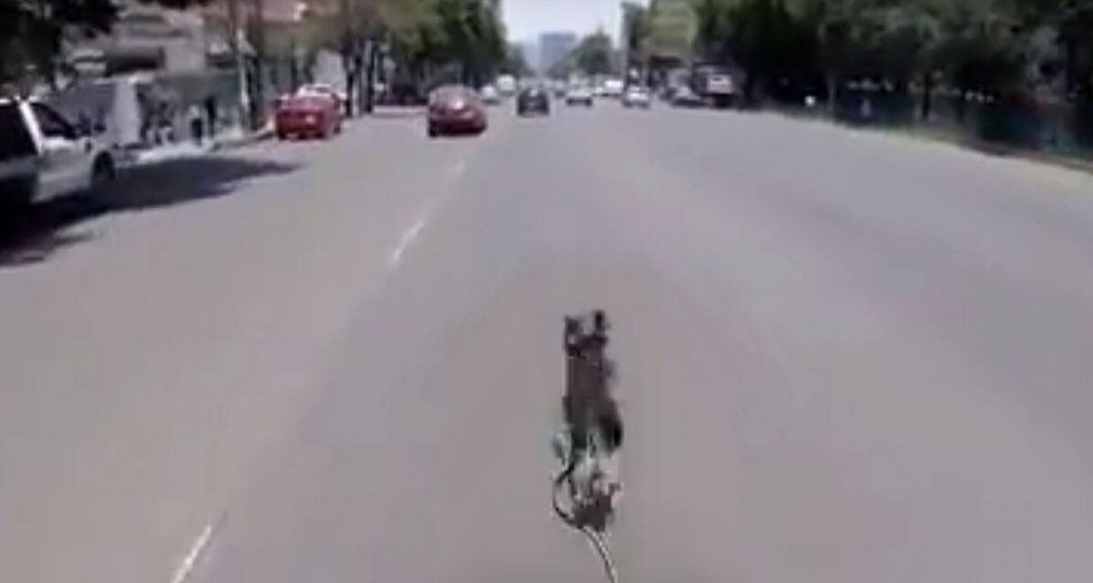 Bild zu Spektakuläre Flucht: Terrier hat Riesenglück!