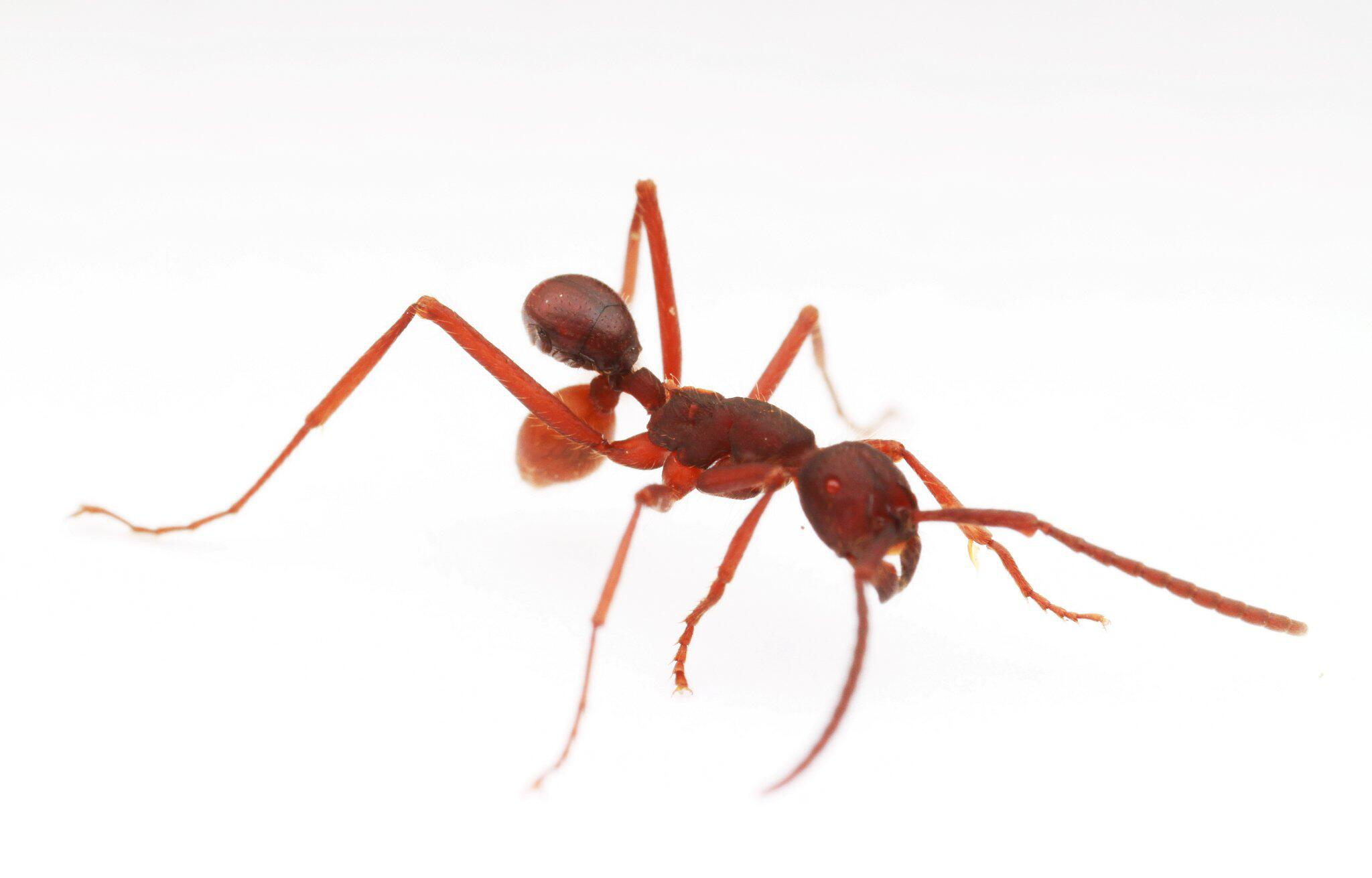 Bild zu Neu entdeckter Käfer
