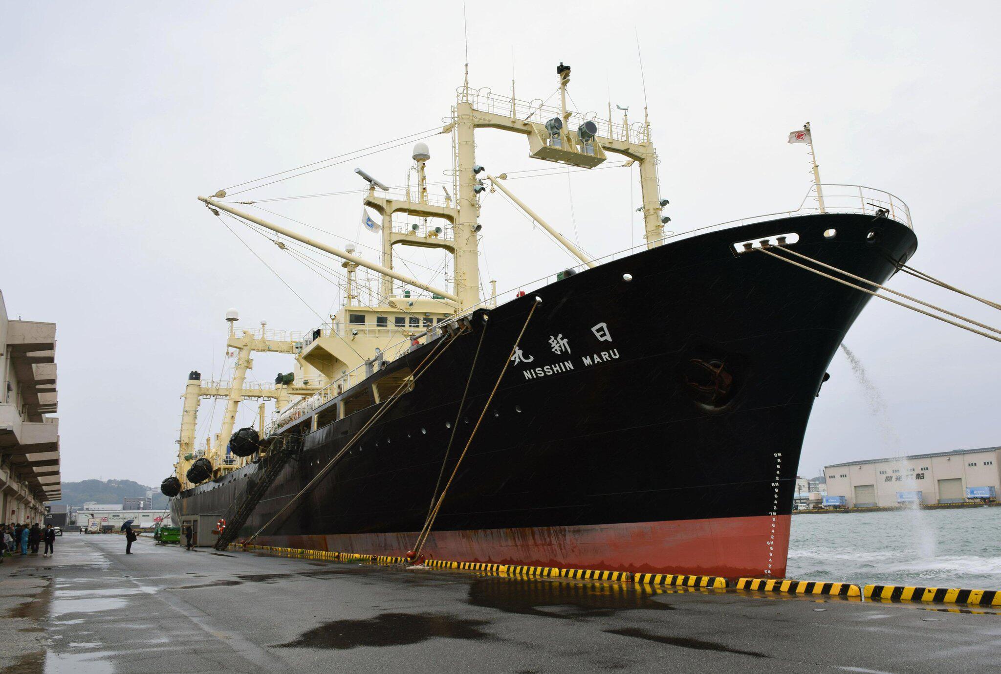 Bild zu Japan angeblich vor Austritt aus IWC