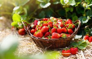 Darum sollten Sie häufiger Erdbeeren essen