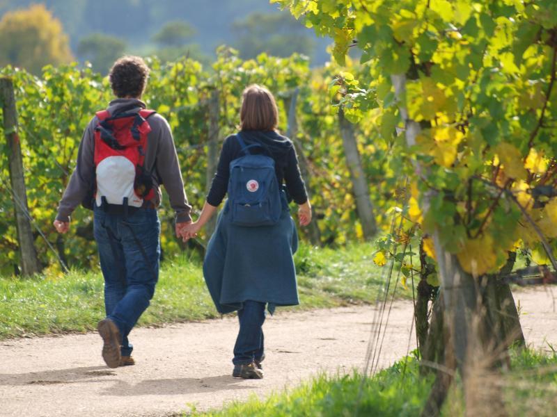 Bild zu Wandern in den Weinbergen