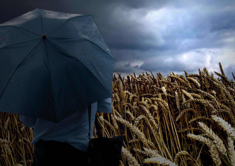 Bild zu Regenschirm