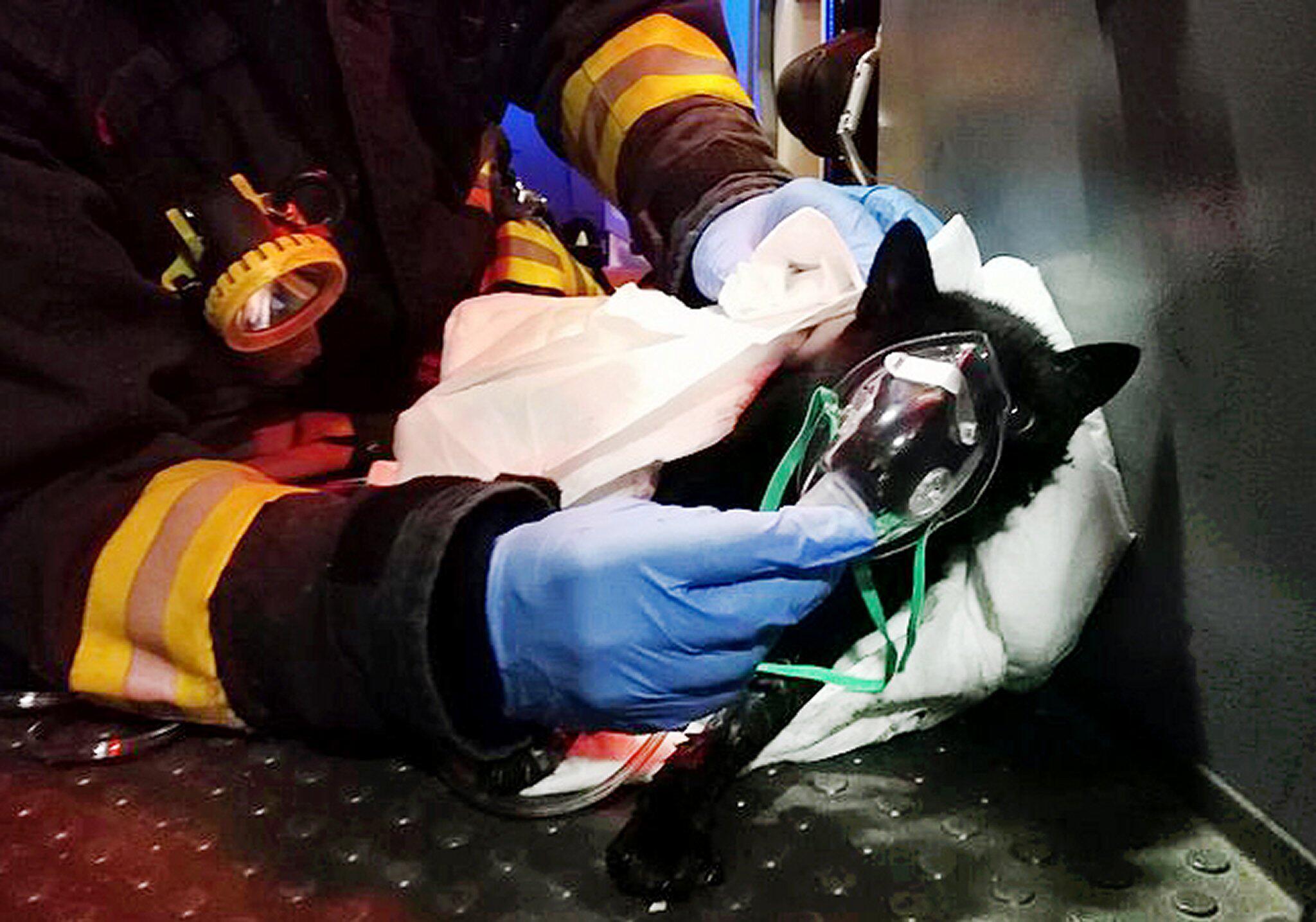 Bild zu Katze bei Brand gerettet