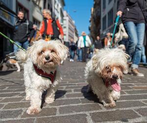 Hunde, Basel, Flashmob