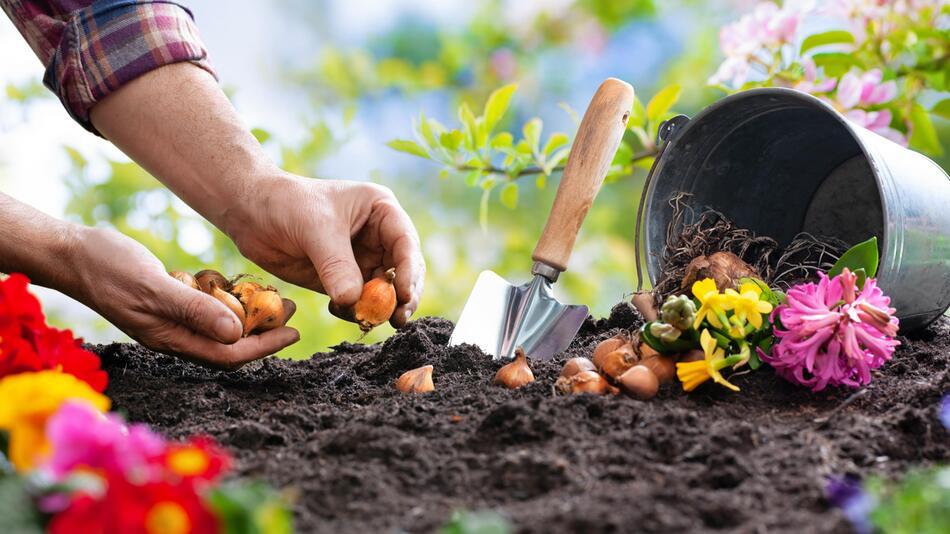 Garten, Umgestalten, Deko, Frühling, Blumen, Beet, Pflanzen, Vögel, Bienen